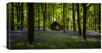 Bluebell Wood in the spring, Hampshire, England, Canvas Print