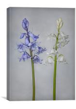 "Bluebells and ""Whitebells"", Canvas Print"