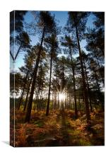 New Forest Autumn Dawn, Canvas Print