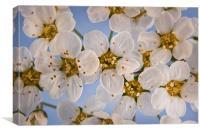 Spring Blossom, Canvas Print