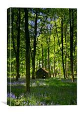 Wild Wood, Canvas Print