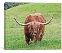 Brown Longhorned Highland Cow, Canvas Print