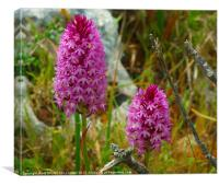 PURPLE WILD ORCHIDS, Canvas Print