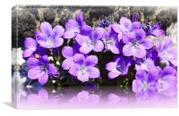 CAMPANULA LILAC FLOWER REFLECTION, Canvas Print