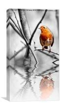 ROBIN REFLECTIONS, Canvas Print