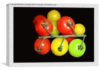 COLOURED TOMATOES, Canvas Print