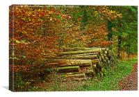 NEW FOREST WOOD STACK IN AUTUMN, Canvas Print
