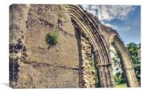 Clinging on Inchmahome Priory, Canvas Print