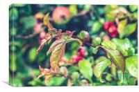 Apple Plant, Canvas Print
