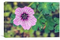 Purple Plant, Canvas Print
