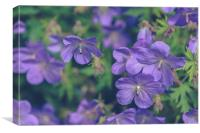 Purple Flowers, Canvas Print