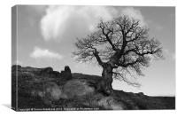 Lone tree on rocky outcrop, Canvas Print