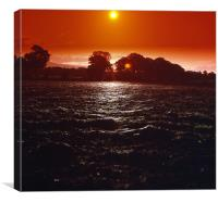 Gossamer Sunset Fields, Canvas Print
