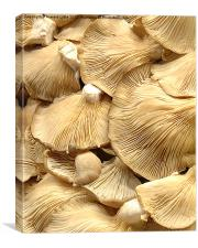 Mushrooms, Canvas Print