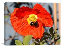 Poppy Bee, Canvas Print