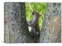 Squirrel claiming its reward, Canvas Print
