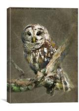 Sleepy Barred Owl, Canvas Print