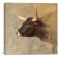 Texas Longhorn #2, Canvas Print