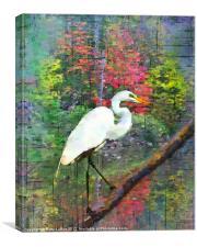 Great Egret, Canvas Print