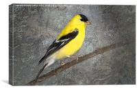 American Goldfinch, Canvas Print