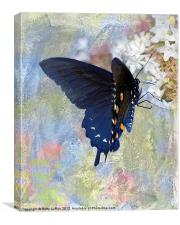Pipevine Swallowtail Butterfly in Spring, Canvas Print