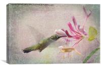 Hummingbird in Pink, Canvas Print