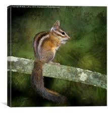 Chipmunk in the Woods, Canvas Print