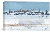 Pelican Companions, Canvas Print