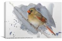 Winter Northern Cardinal, Canvas Print