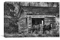 Is This Our Barn, Canvas Print