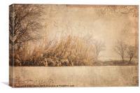 Natural Beauty, Canvas Print