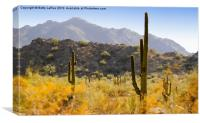 Sonoran Desert Beauty, Canvas Print