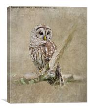 Barred Owl Portrait, Canvas Print
