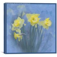 Daffodils in Blue, Canvas Print