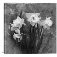 Daffodils in Black and White, Canvas Print