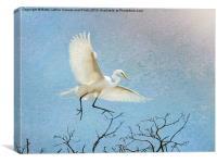 Sky Dancing, Canvas Print