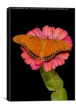 Gulf Fritillary Butterfly, Canvas Print