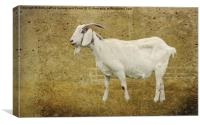 Billy Goat Gruff, Canvas Print