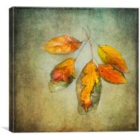 Five Autumn Leaves, Canvas Print