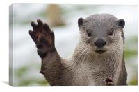 Waving Otter, Canvas Print