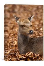 Deer in Autumn Leaves, Canvas Print
