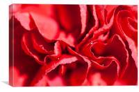 Red Carnation Flower, Canvas Print