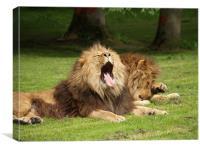 Sleeping Lions, Canvas Print