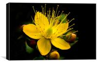 Yellow Flower, Canvas Print