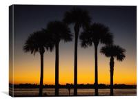 Palm trees at sunrise, Canvas Print
