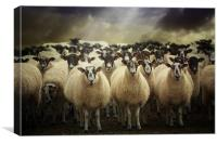 Sheepfest, Canvas Print
