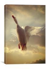 White Duck, Canvas Print