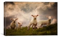 Lambs, Canvas Print