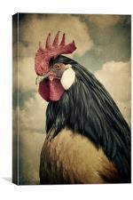 Cock, Canvas Print