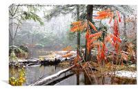 Autumn Snow Monongahela National Forest, Canvas Print